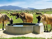 Farm advice: Keep your cows cool this summer