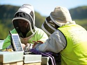 Precision beekeeping launches in NZ