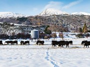 Farm advice: Winter grazing must not compromise animal health and welfare