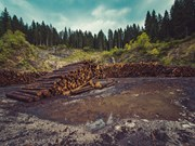 Rushed Log Brokers Bill deserves the chop