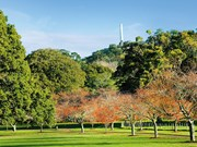 Cornwall Park: An Oasis in the City