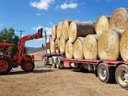 Hay exporter advice sought