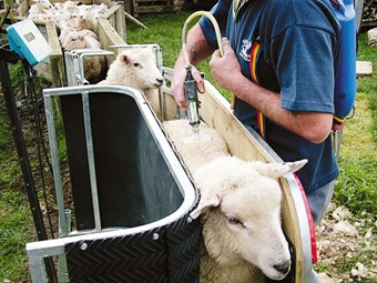 Animal handling: Combi Clamp