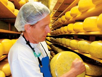 Mercer Cheeses maturing well