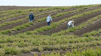 Agribusiness optimistic in 2013 amidst challenges