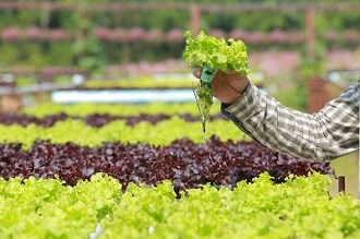 Hydroponics; organic farming set to deliver over next five years