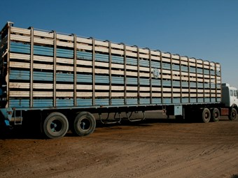 Live export ban threatens transport industry