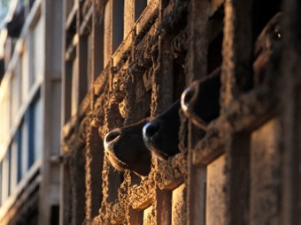 Wilkie and Xenophon push for 2014 live animal export ban