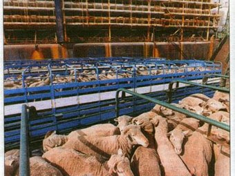 Live export operations found wanting at Fremantle Port