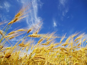 CBH raises freight rates for WA grain growers