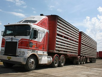 Type 2s to get night access to Roma saleyards