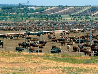 Northern Australian Cattle transport routes on agenda