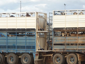 WHSQ calls for feedback on cattle crate design and use
