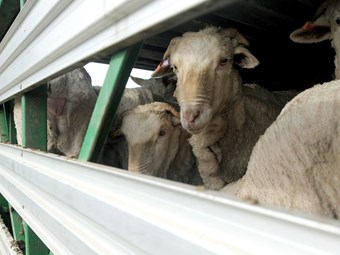 Industry slings mud back at Melbourne livestock transport call