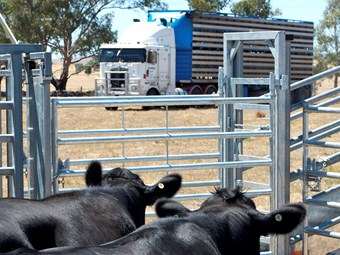 New livestock loading guide now available to industry