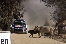 VIDEO: Sebastien Ogier narrowly dodges cow with WRC car