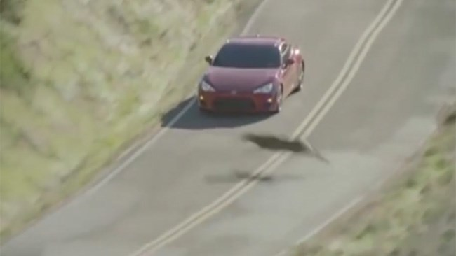 Toyota 86 in close call with deer