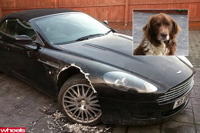 Dog eats Aston Martin