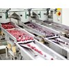Frozen berries on a production line