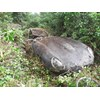 Jaguar E type hedge find 1
