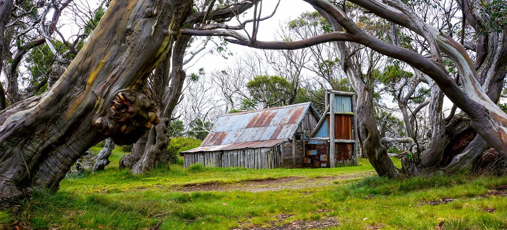 Wallaces Hut Bogoing, High Country
