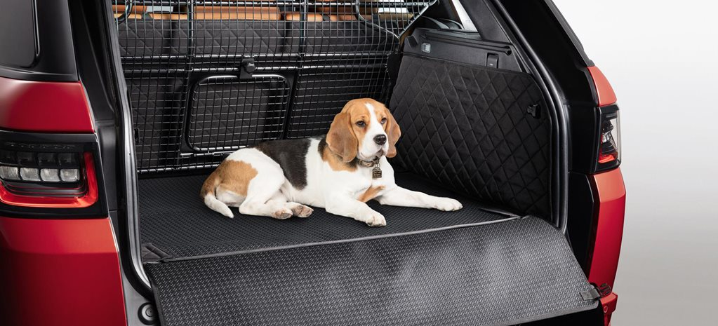 Christmas present ideas for car-loving dogs