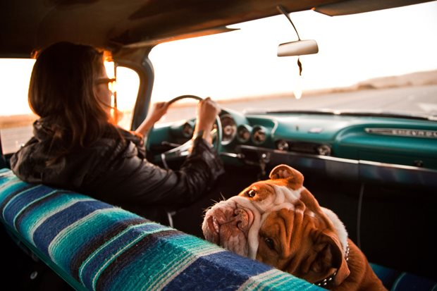 What you need when travelling with a dog