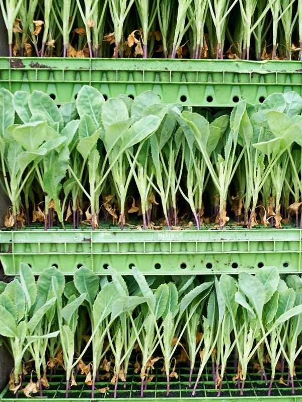 vertical_vertical_farming.jpg