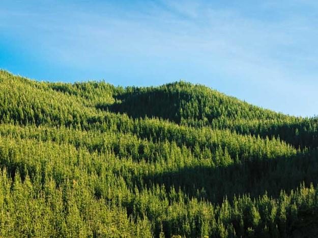forest-New-Zealand.jpg