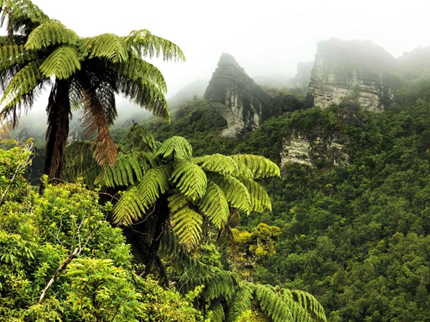 86070901_Mountains-and-fern-tree-forest,-Te-Urewera-National-Park_getty.jpg