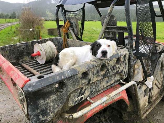 dogs-life.jpg