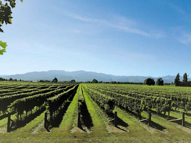 vineyard-2-.jpg