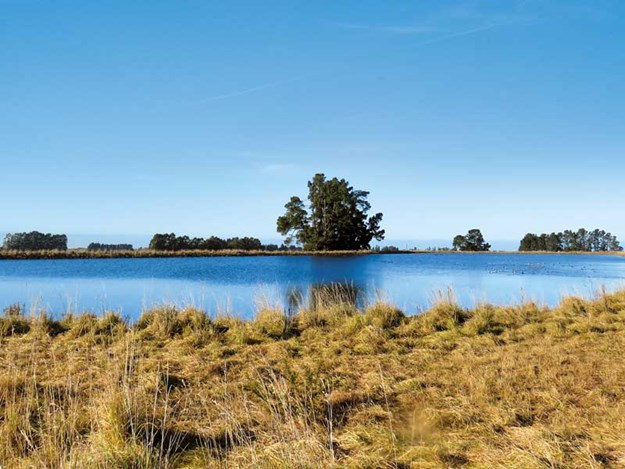 New-dam-and-pond-regulations-will-affect-many-New-Zealand-farmers.jpg