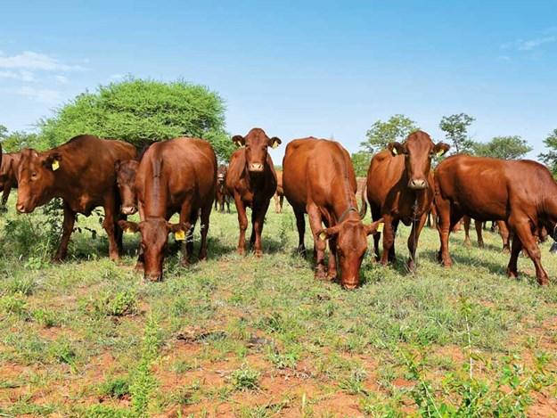Calla-Visser-Botswan--beef-farmer-South-Africa-Farm-Trader-5.jpg
