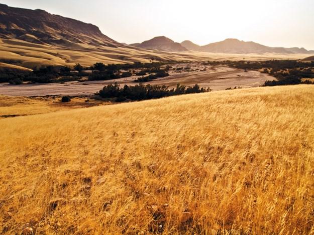 farming-dry-conditions.jpg