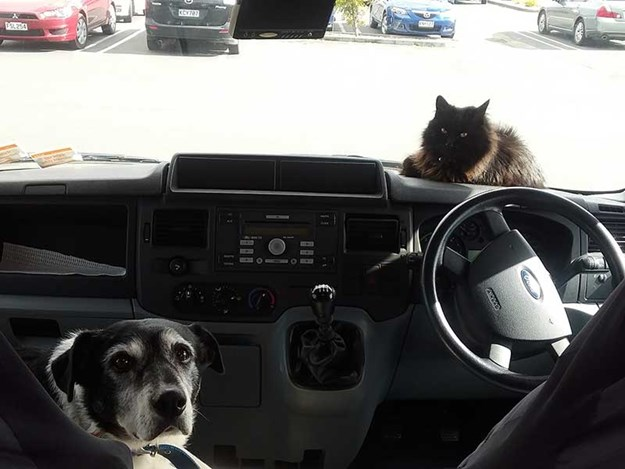 NZMCD-travelling-with-pets-RV-2.jpg