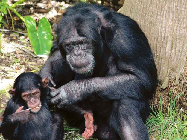 The-interaction-between-the-chimpanzees-was-lovely-to-watch.jpg