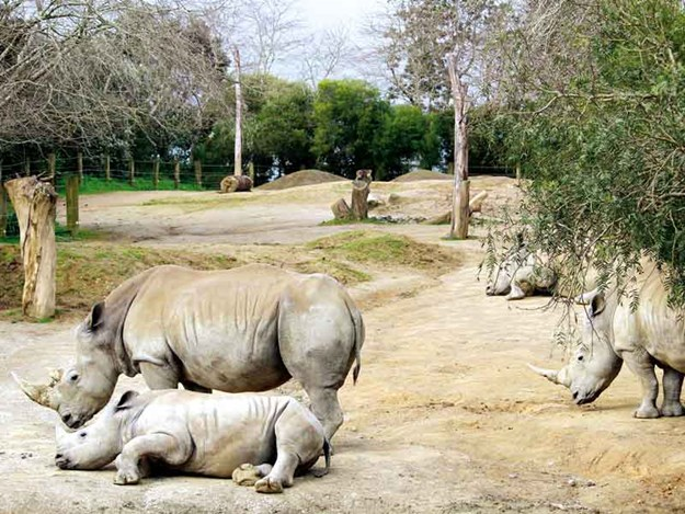 The-rhinos-were-magnificent-and-had-a-huge-enclosure.jpg