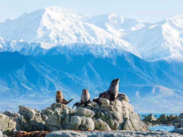 Seal-spotting-isn't-hard-in-Kaikoura!---Credit-Bare-Kiwi.jpg