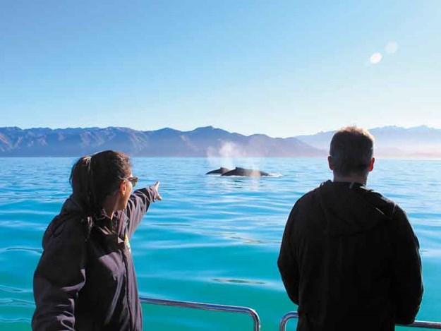 Whale-spotting.jpg