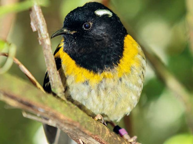 Stitchbird-Sanctuary-Mountain--credit-Maddox-photography68Maddox-Photography-nz.jpg