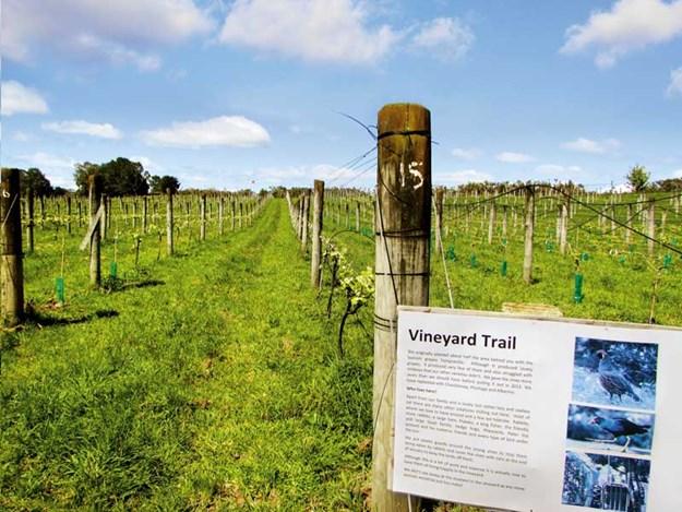Whelan_11-Vineyard-Trail,-Ake-Ake-Vineyard.jpg