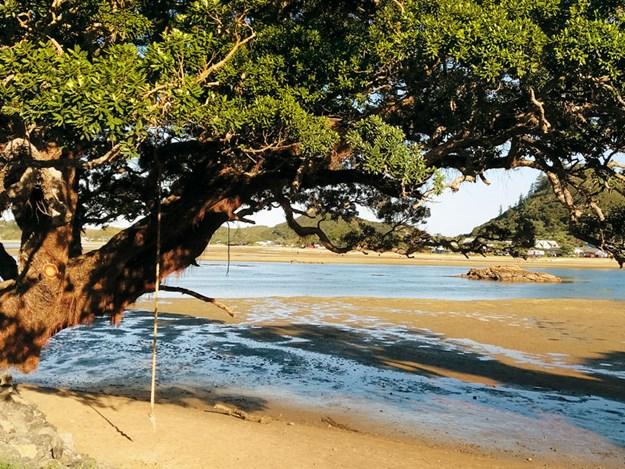 Whelan_7-Pataua-estuary.jpg