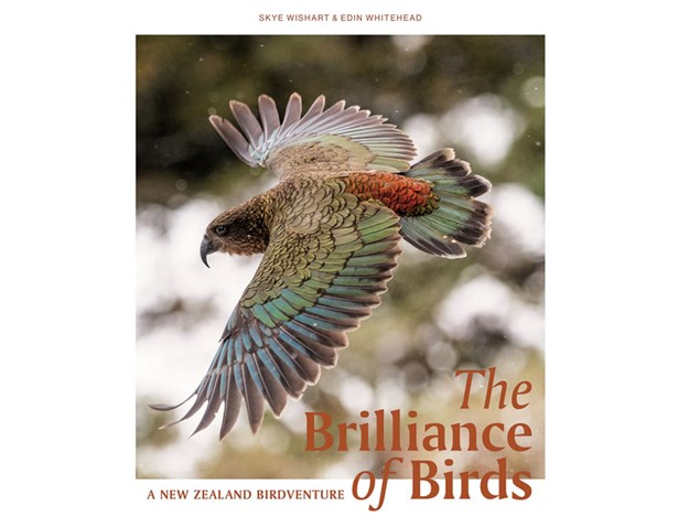 Book-Cover---The-Brilliance-of-Birds-(2).jpg
