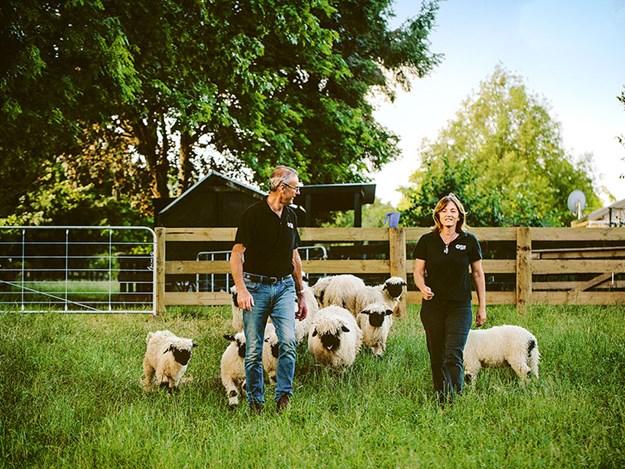 enchanting-cambridge-Rose-Creek-Sheep-Tours.jpg