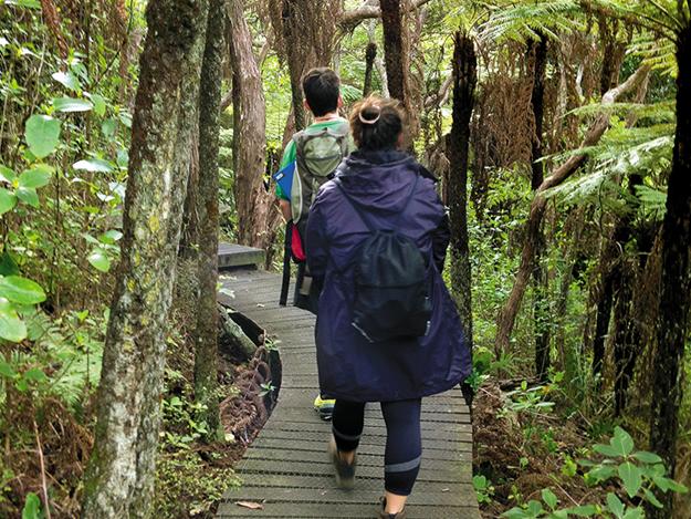 Tiritiri matangi  Walking the Kawerau Track.png