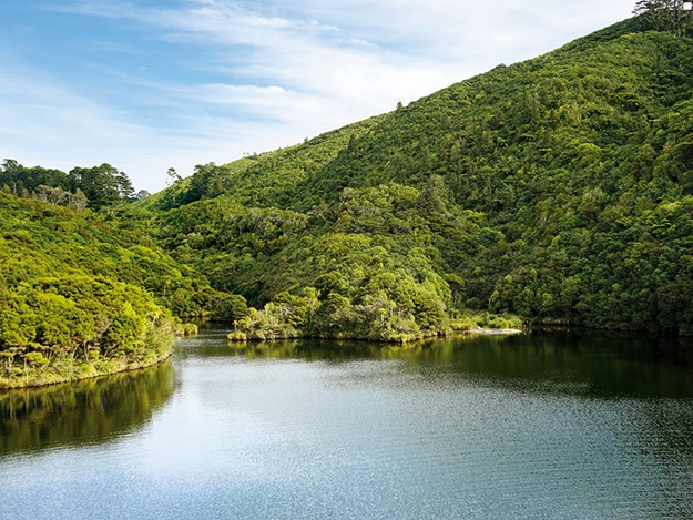 Wild NZ at its natural best