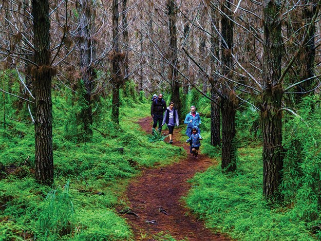 There are lots of great walking tracks to explore in the area.jpg