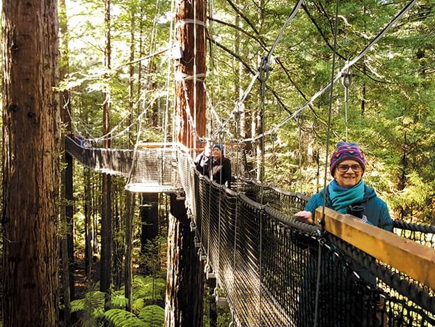 Whelan_19 On the Redwoods Walkway.jpg