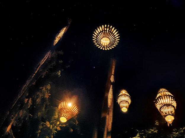 Whelan_20 The Redwoods Nightlights.jpg